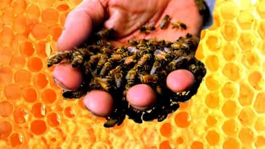 Ce este apiterapia şi care sunt beneficiile ei pentru sănătate?
