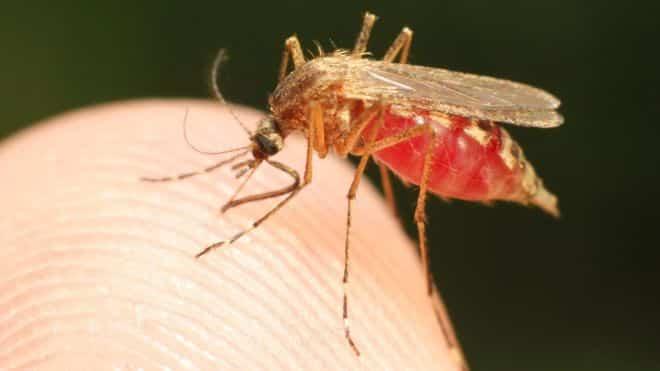 Cum putem scăpa de malarie până în 2050 - BBC 1